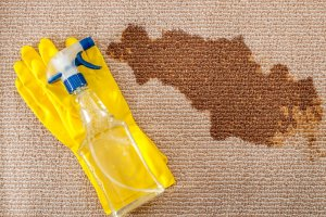 Carpet Cleaning News & Updates