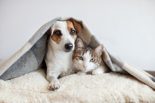 Carpet Cleaning in Bolton – How To Get Rid Of The Smell Of Pet Accidents!